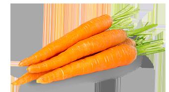 แครอต
